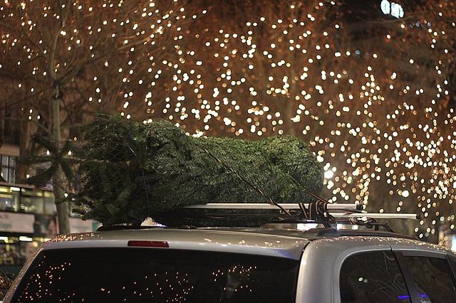 christmas tree disposal removal