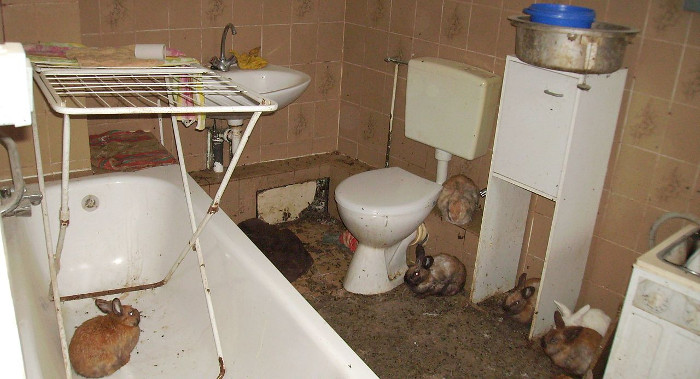 animal hoarding causes unsanitary conditions